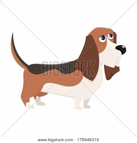 Cute purebred basset hound dog character, cartoon vector illustration isolated on white background. Nice and friendly basset hound dog character, colorful cartoon illustration