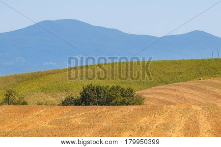 Brown Green Blue Landscape