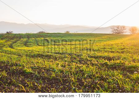 Wheat field landscape with path in the sunset time.