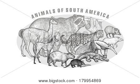 Poster with image of animals South America. Hand drawing spectacled bear sloth lama jaguar wolf peccary anteater tapir capybara battleship cayman. Vintage engraving. Vector illustration art