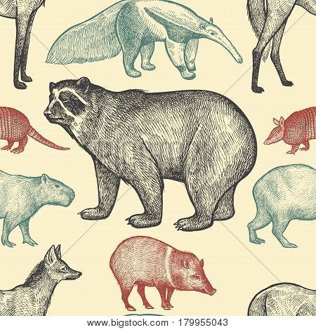 Seamless pattern with animals South America. Spectacled Bear Peccary Capybara Armadillo Maned Wolf Anteater on pastel background. Vector illustration art. Black redblue. Vintage engraving.