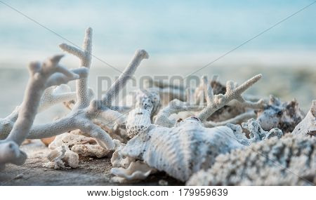 Sea shells and corals on the  beach.