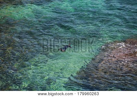 snorkelling swimmer In diving-suit open sea view from above