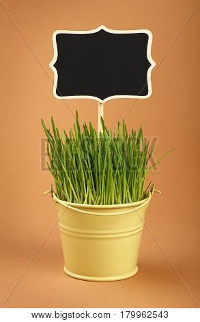 Spring Green Grass With Sign In Bucket Over Brown