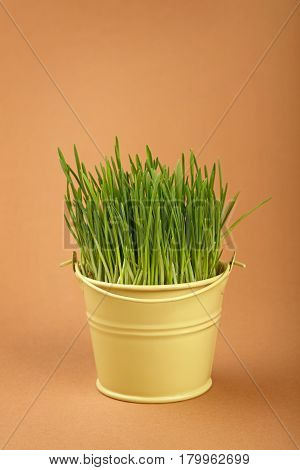 Spring Grass Growing In Small Bucket Over Brown
