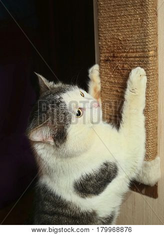 Cat  Exercise  Claws Against Scratcher Scratch