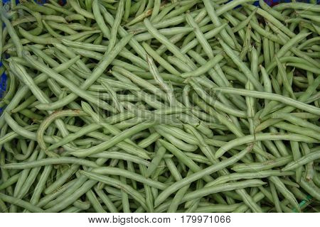 The long light green pods of haricot filled with seeds