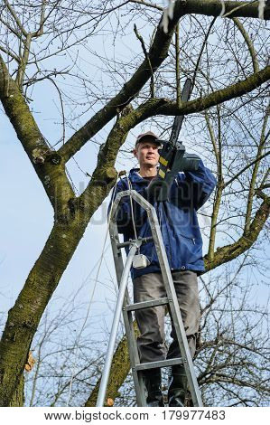 Work in the garden. Man cutting a branch of withered tree with electric chain saw. Work in the garden.