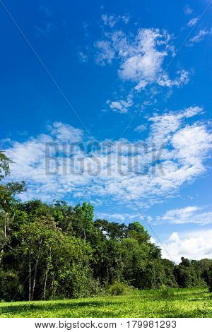 Vertical landscape view of the Amazon Rainforest in Peru