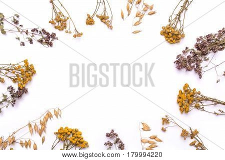 Flat lay frame. Dry branches of tansy and heather on a white background. Calluna vulgaris and Tanacetum view from above.
