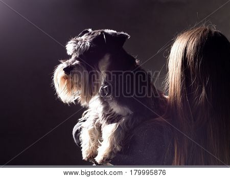 Dog Posing In Girl's Hands