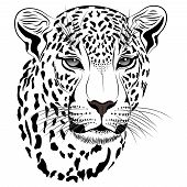 Vector image of a leopard executed in the form of a tattoo poster