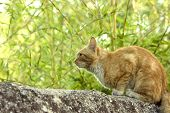 Orange cat sits on a concrete ledge watching and in position to pounce on a bird. poster