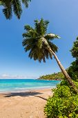 Idyllic paradise palm Anse Mayor beach on the North-West side of Mahe Island near the town of Bel Ombre Seychelles. poster