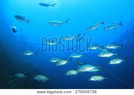 Fish in ocean. Reef fish underwater