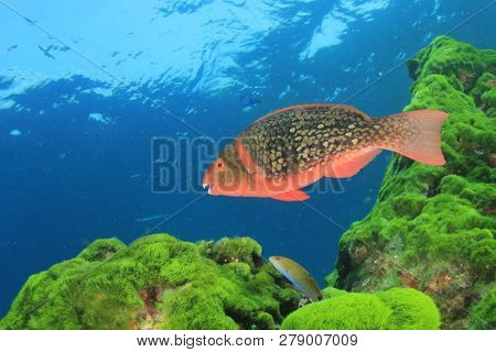 Coral reef fish in ocean
