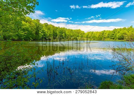 Forest Lake On Springtime Noon. Beautiful Nature Scenery. Beech Forest Around The Body Of Water. Bea