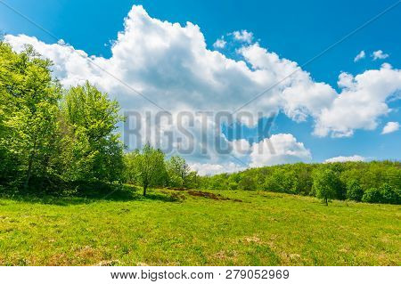 Grassy Meadow Among Beech Forest. Beautiful Springtime Scenery At High Noon. Huge Fluffy Cloud Above