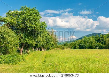 Beautiful Countryside In Springtime. Grassy Field Among Wild Apple Trees. Mountain In The Distance.