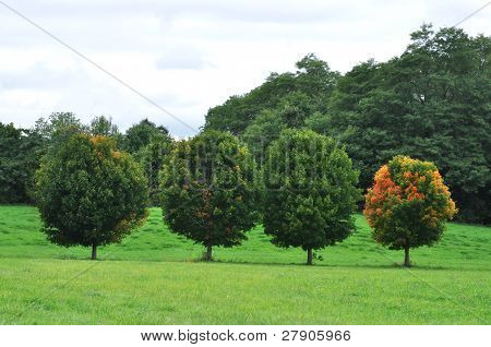 Four Perfect Trees