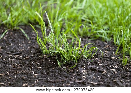 Growing Up Grass Seeds In The Garden