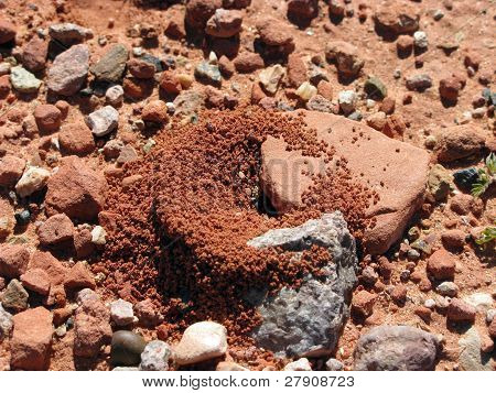Red Rock ant hill