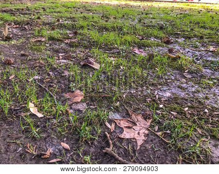 Dirty Unkempt Lawn With Grass, Unkempt Lawn Background