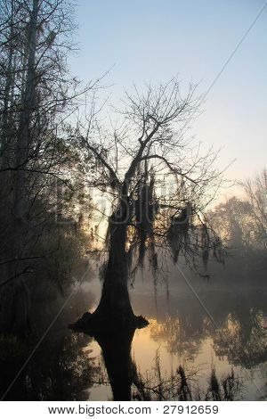 Bald Cypress - Okefenokee Swamp, Georgia