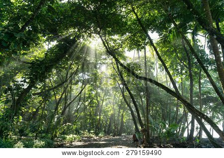 Sun Rays Shine Through Jungle Rain Forest, Costa Rica Corcovado National Park
