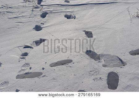 Footprints On A Fresh Deep Snow In Ukraine