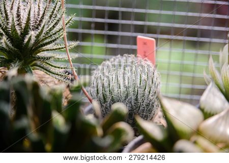 Small Cactus In Pot, Beautiful Succulent Plant With Sun Ligh