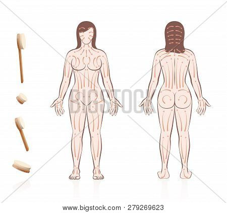 Body Skin Brushing. Dry Skin Brushing With Directions Of Brush Strokes. Health And Beauty Treatment