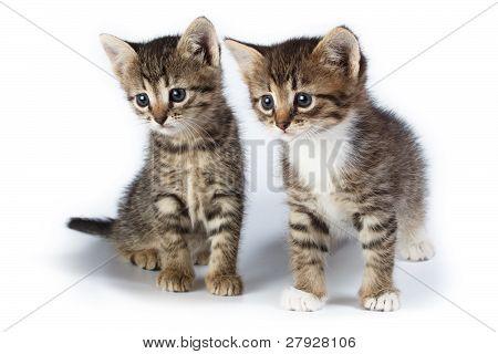 Dos gatitos.