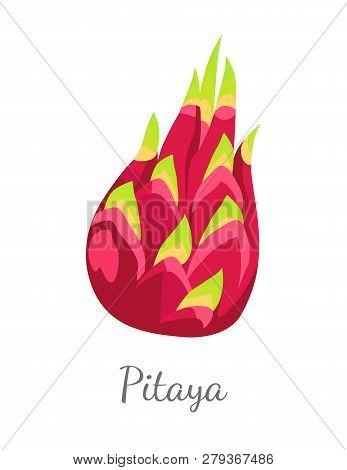 Pitaya Or Pitahaya Exotic Juicy Fruit Vector Isolated. Tropical Edible Food, Dieting Vegetarian Icon