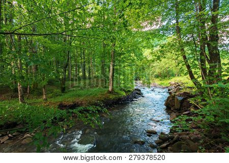 Beautiful Scenery Of Mountain River Running Through Green Beech Forest In Springtime. Sunny Weather.
