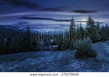 Beautiful Springtime Landscape In Mountains At Night In Full Moon Light. Spruce Forest On Grassy Hil