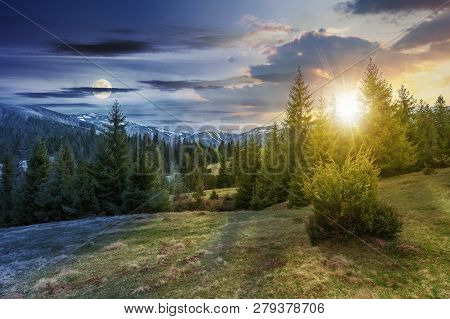 Day And Night Time Change Concept Of Beautiful Springtime Landscape With Sun And Moon. Spruce Forest