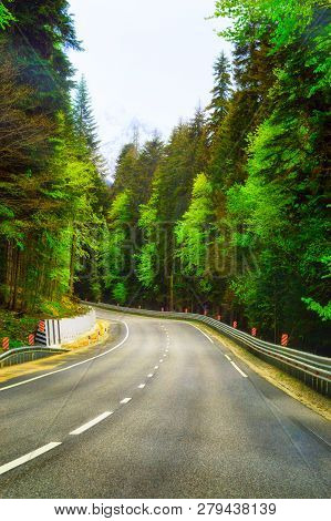 Highway Road Journey In Green Forest Sunlight Landscape. Forest Road Way Scenic Vertical Photo Sunli