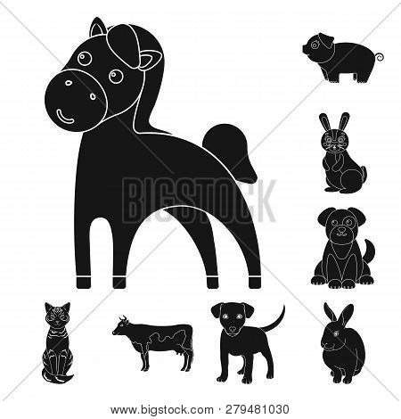Vector Design Of Animal And Habitat Icon. Collection Of Animal And Farm Stock Symbol For Web.