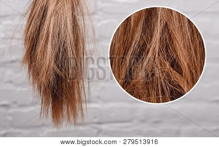 Brittle Dull Hair, Damaged Root Structure Female Gray Background.