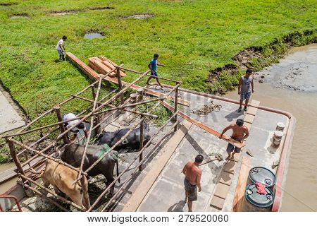 Napo, Peru - July 14, 2015: Crew Of A Cargo Boat Arabela I Transports Wooden Planks.