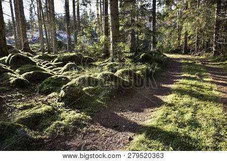 Beautiful View From A Green And Mossy Woodland
