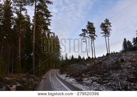Winding Dirt Road Through A Coniferous Woodland