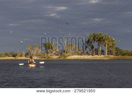 Woman Kayaking In The Gulf Of Mexico With Birds Flying Overhead - Florida