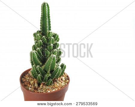 Close Up Green Cactus In Pot With Small Rock Isolated On White Background (selective Focus)