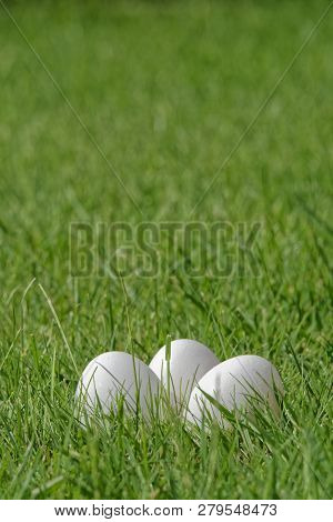 Close-up Of Three White Easter Eggs In Green Grass