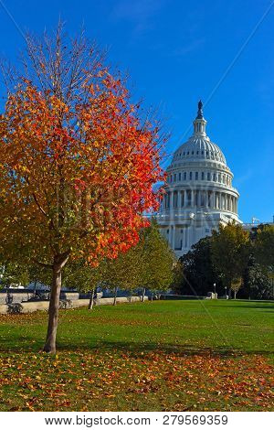 Autumn On Capitol Hill In Washington Dc, Usa. Maple Tree In Fall On Us Capitol Grounds.
