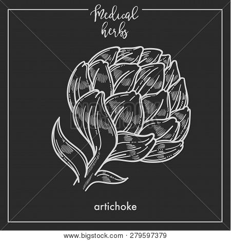 Artichoke Medical Herb Sketch Botanical Design Icon For Medicinal Herb Or Phytotherapy Herbal Tea In