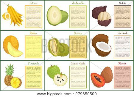 Citron And Salak Fruits Posters With Text Set Vector . Mamey And Pineapple, Sugar Apple And Durian.