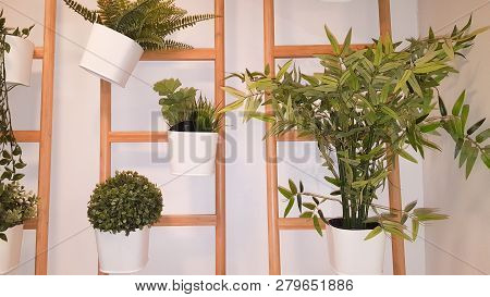Green Plant Hanging In The House Interior